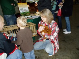 Showing the buff Orpington to a little guy!