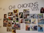 Chi-town's chicken residents